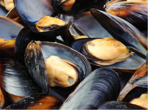Close-up of big steamed fresh mussels