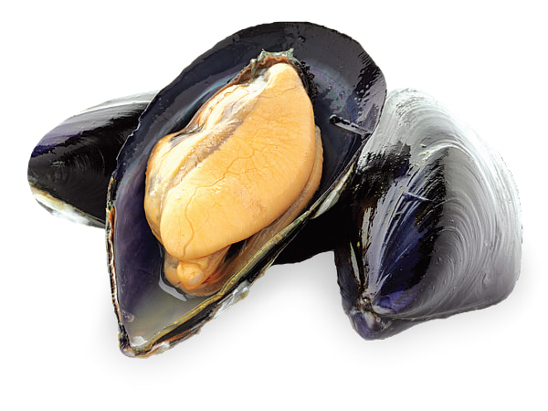 Open mussels in white background