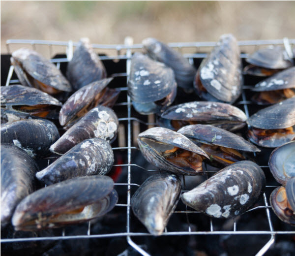 Mussels on the grill for cooking on the fire
