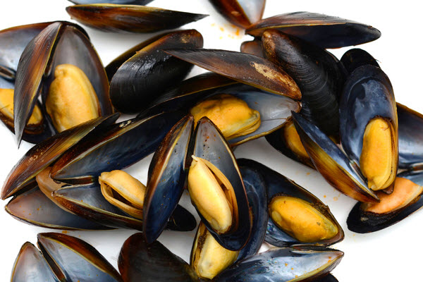 Fresh mussels placed on white background